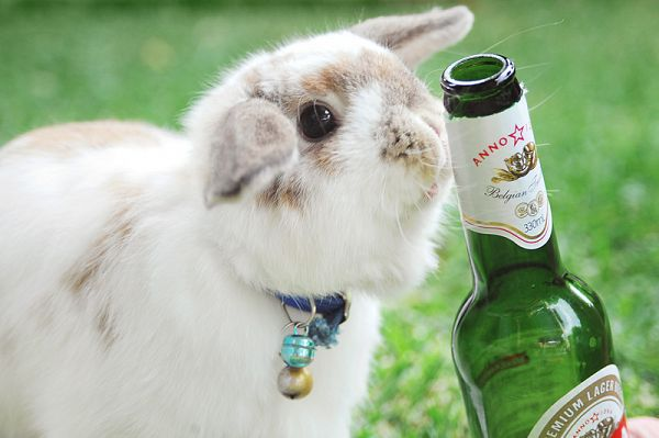 How to have the hoppiest Easter at Zed Victoria!